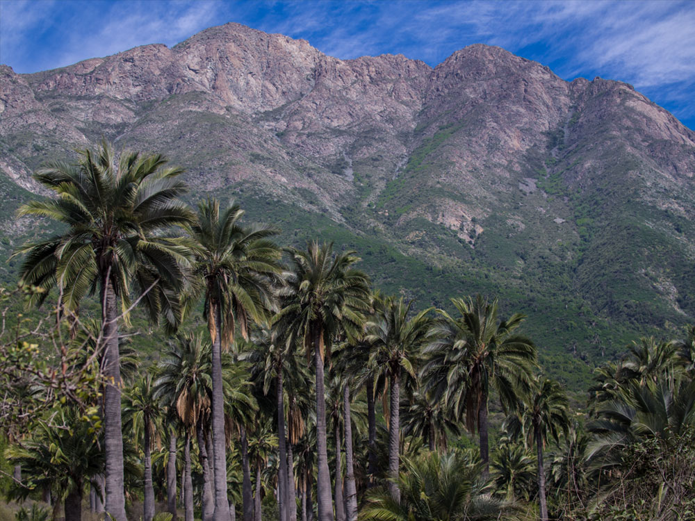 Hiking La Campana National Park