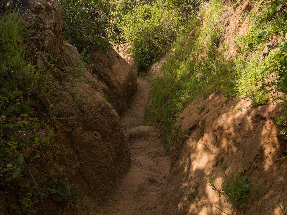 Serpent Path