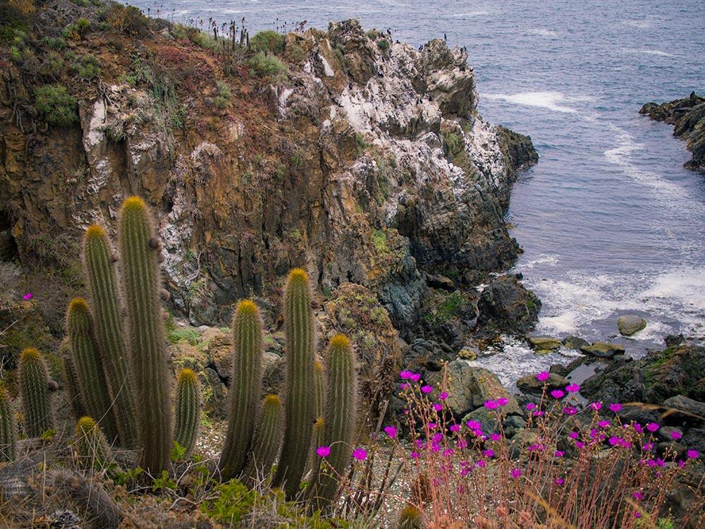 Pacific Coast Gardens