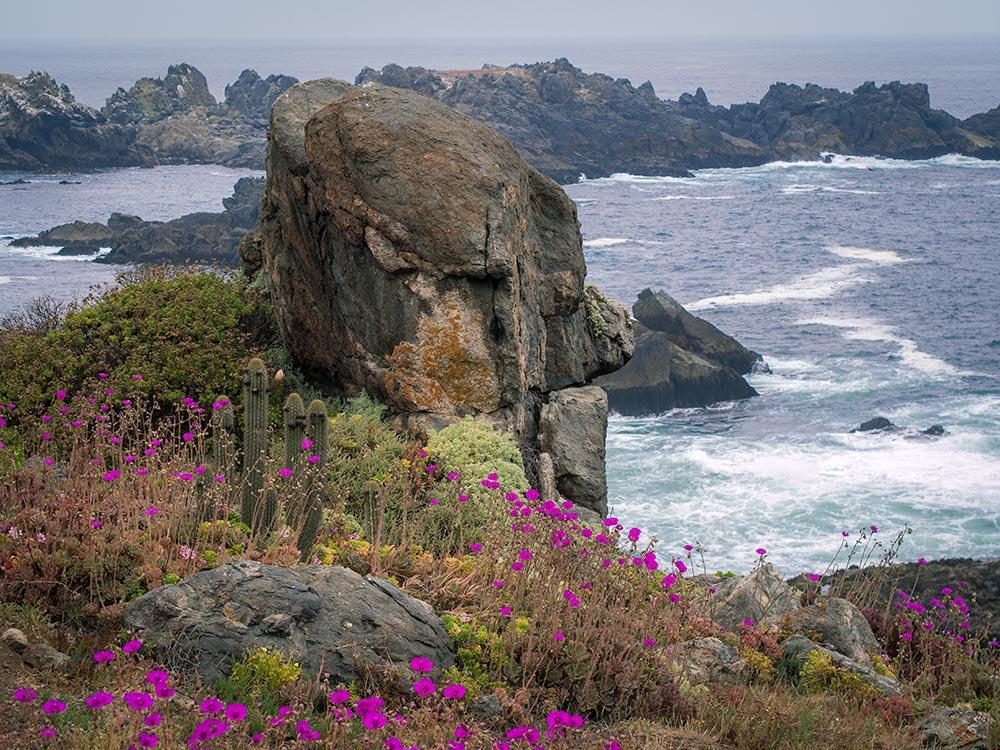 Spring in the Puquén Bio-Park, Chilean Pacific Central Coast.