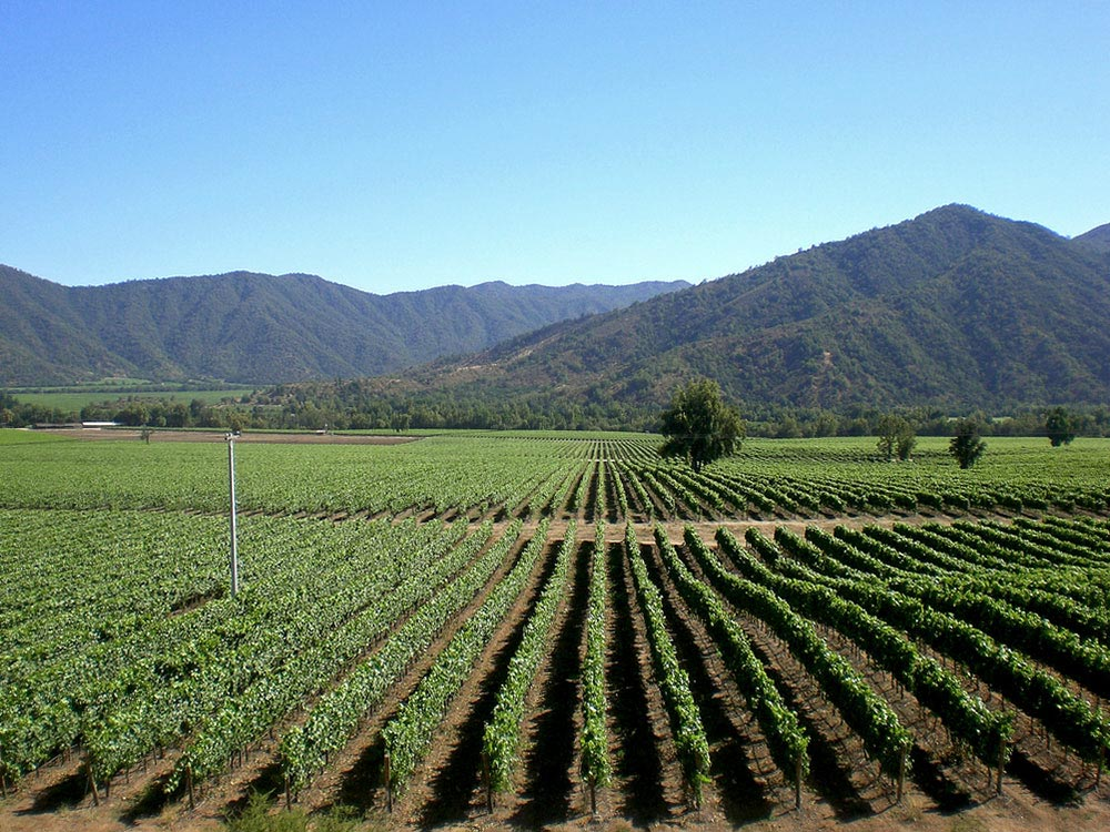 This is Chile's most productive and internationally known wine region, due to its Mediterranean climate and proximity to Santiago.