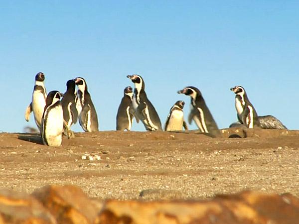 Kayaking to Penguins' Island