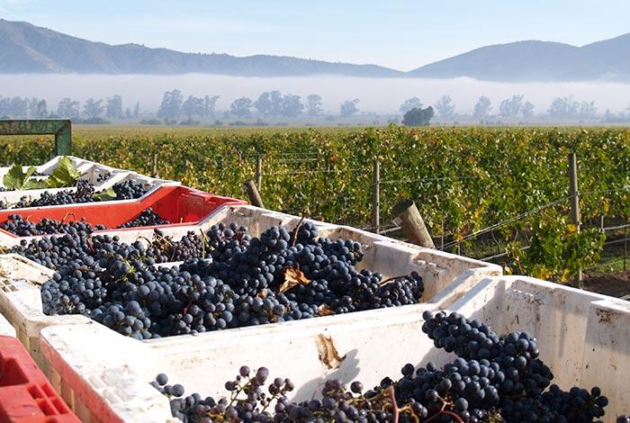 chile-wine-tours-loma-larga-wineyards-02