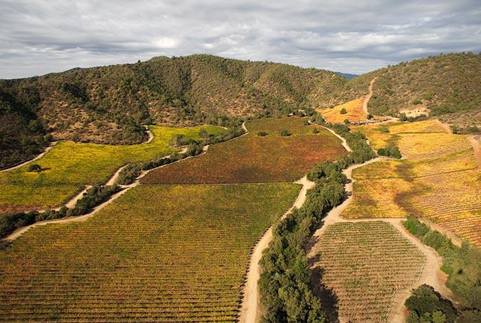 chile-wine-tours-loma-larga-wineyards-04
