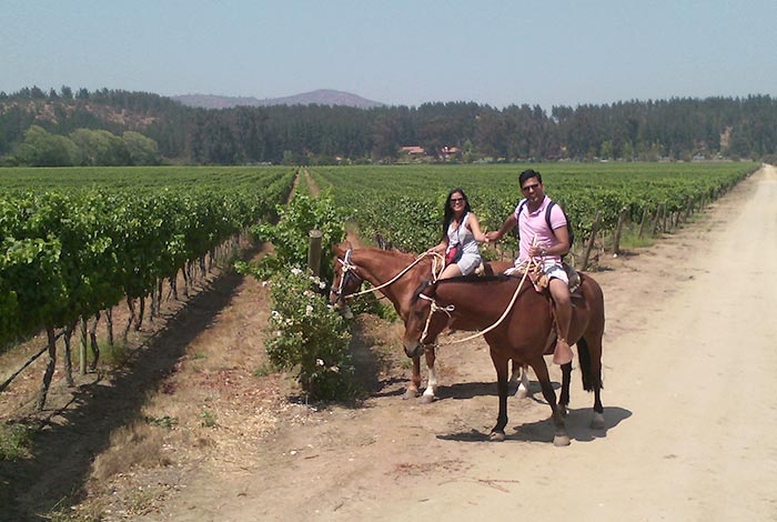 chile-wine-tours-loma-larga-wineyards-05