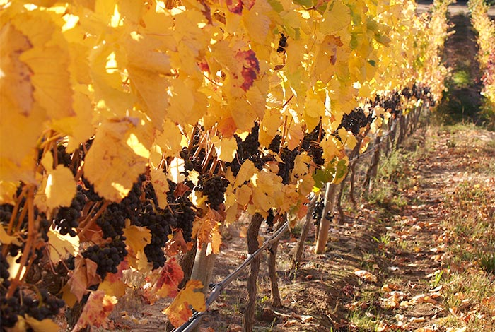 chile-wine-tours-loma-larga-wineyards-10