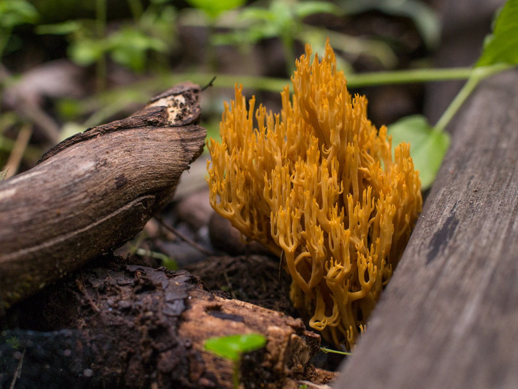 fungi-la-campana-17