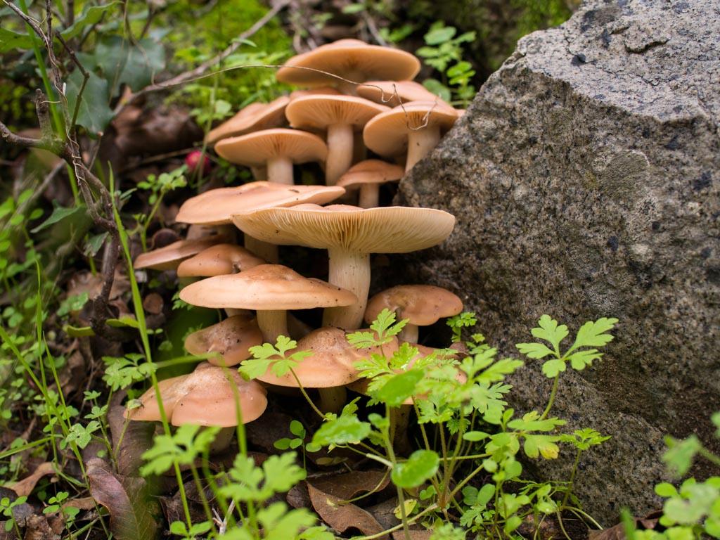 fungi-la-campana-19