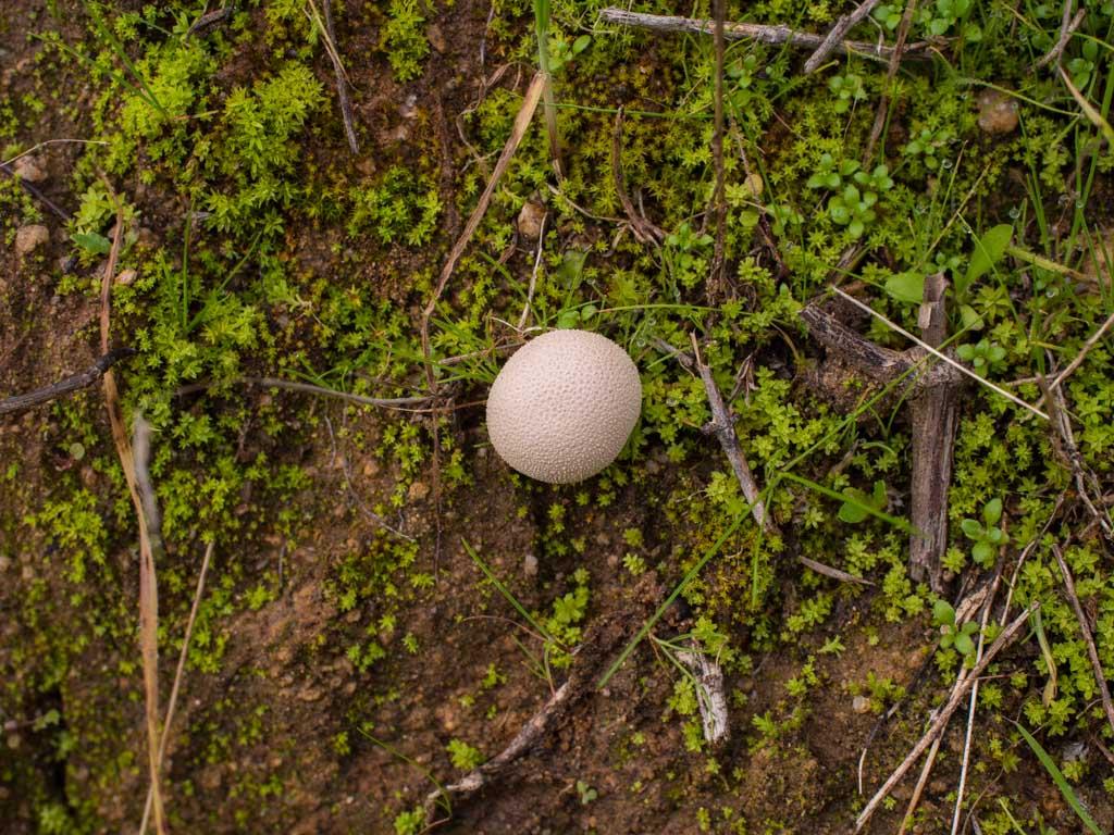 fungi-la-campana-20