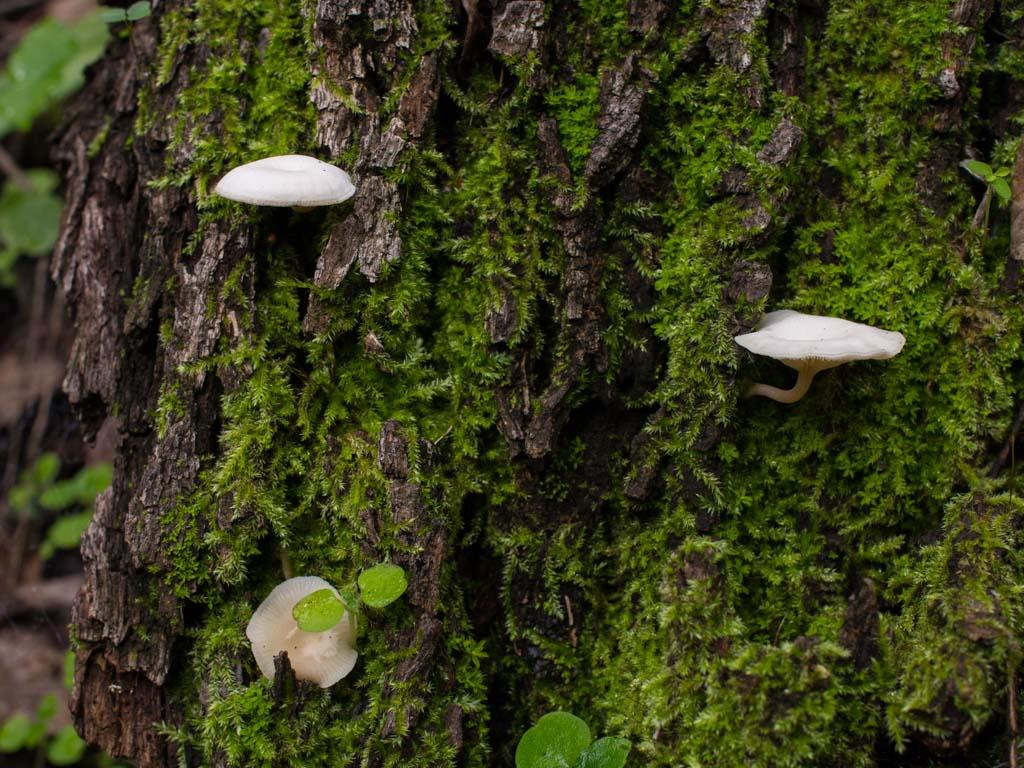 fungi-la-campana-32