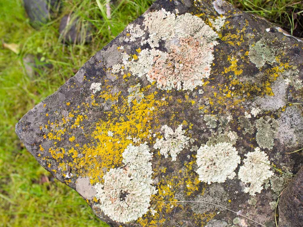 fungi-la-campana-6