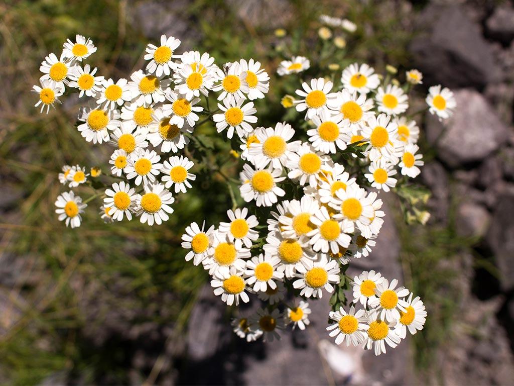 parque-andino-juncal-flores